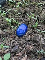 Mustika Tunjung Biru