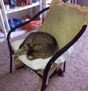 Johnny napping on her chair after her vet visit