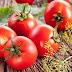Να μη ξεφλουδίζουμε τη ντομάτα συμβουλεύουν οι επιστήμονες
