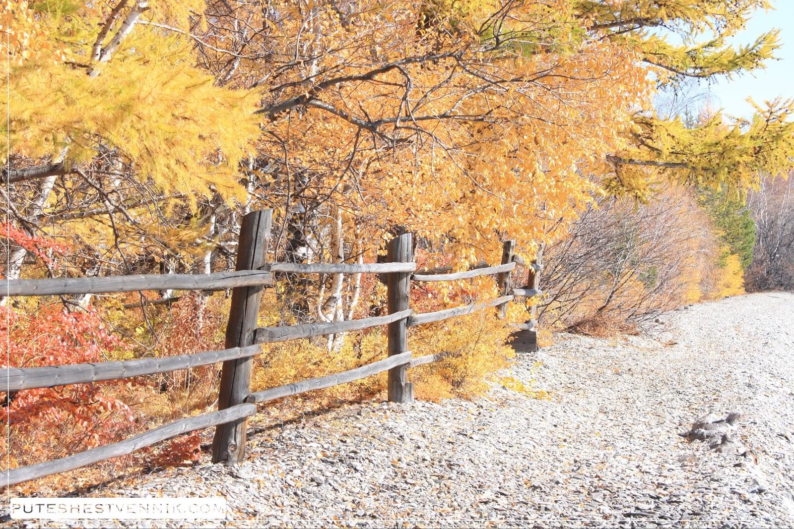 Деревянная ограда и осенние деревья