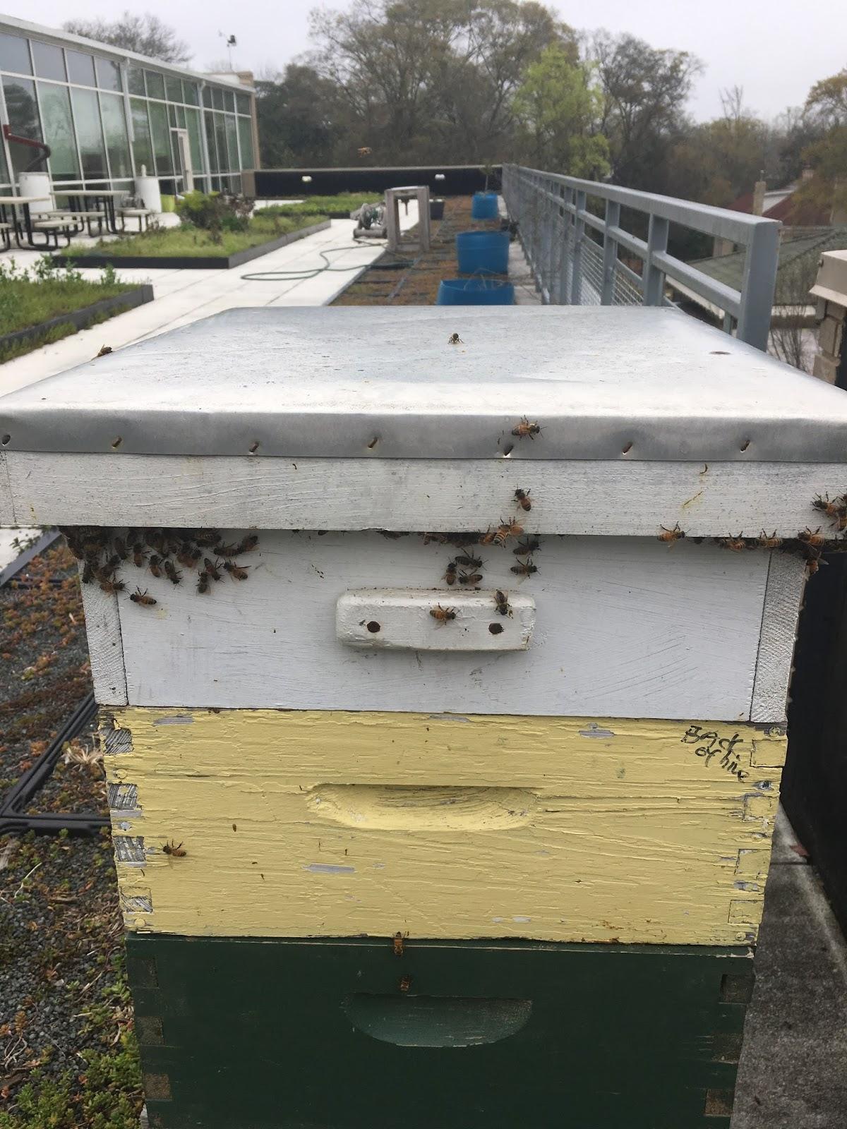 Linda\'s Bees