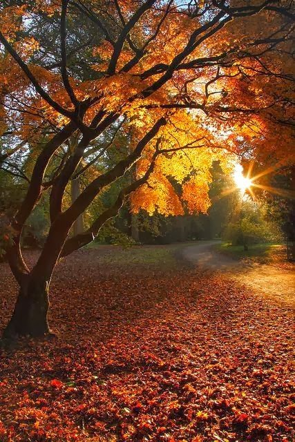 10 Amazing Autumn Photographs