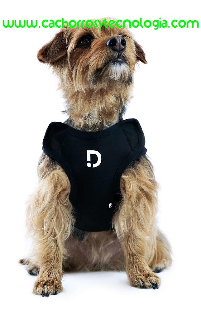 tecnologia cachorros shurkonrad dog can puppy perro