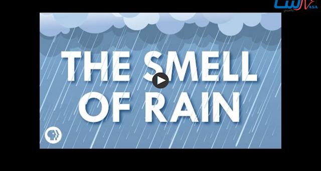 من أين تاتي رائحة المطر؟ تعرف علي الاجابة هنا