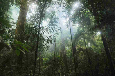 Floresta-tropical