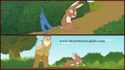 Mr. McGregor & Peter Rabbit Story