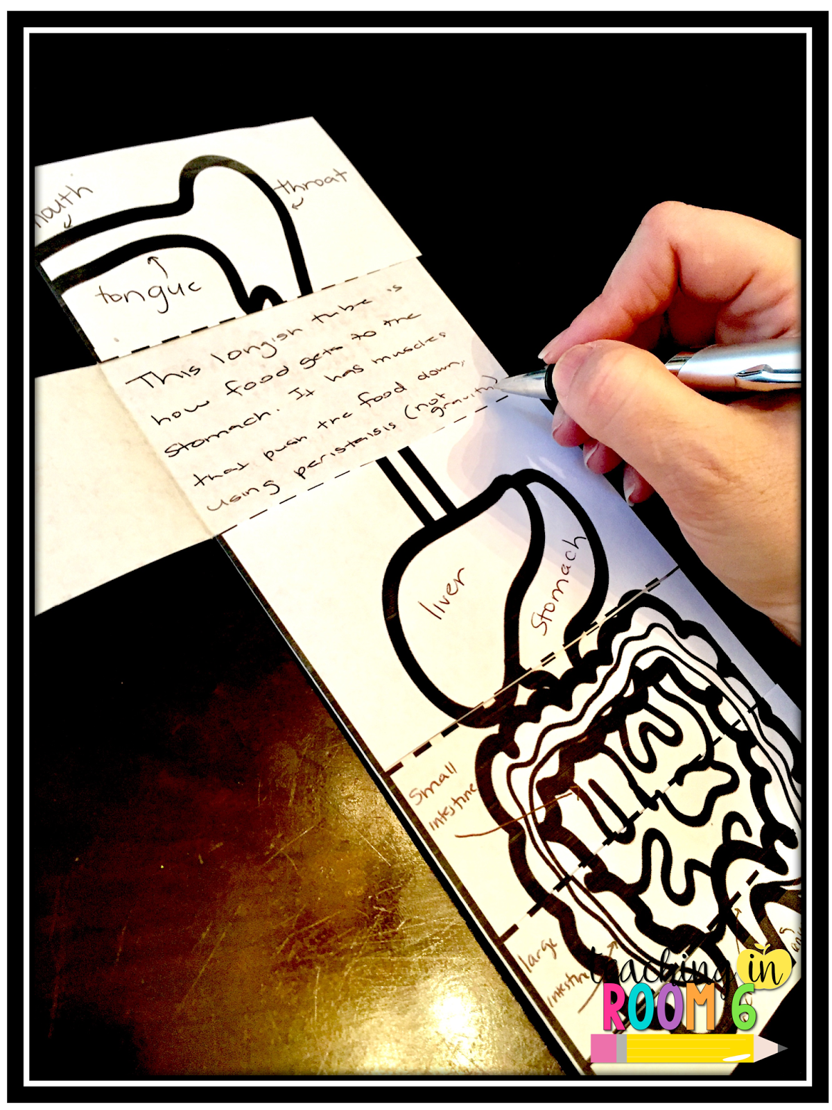 The Digestive System - Teaching In Room 6-6247