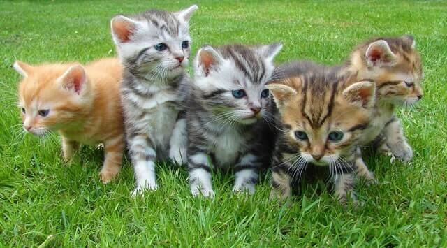 Sejarah Ringkas Penyebaran Kucing ke Penjuru Dunia