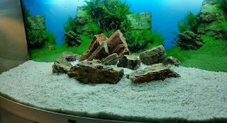 dasar akuarium pasir halus untuk ikan corydoras