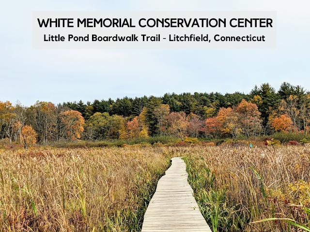 White Memorial Conservation Center Boardwalk