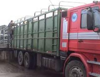 camiones de transporte de ganado