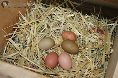 Place more straw on top of the nest pad. Add herbs/dried flowers if desired.
