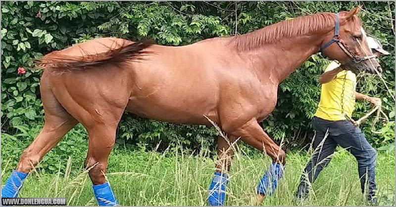 Secuestraron y mataron a un caballo de carreras para intentar comérselo
