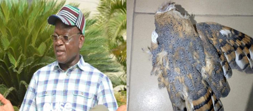 Strange bird attacks Benue Governor