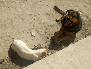 Thelma and Rambo enjoying the sun