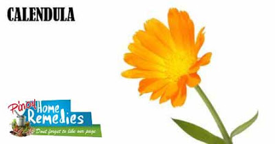 Home Remedies For Yeast Infection: Calendula