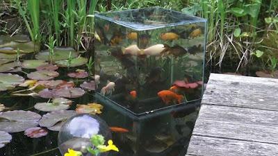 ตู้ปลาในสวนอะควาเรียม