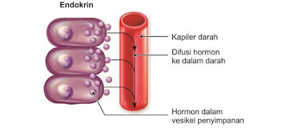 Difusi hormon ke dalam darah