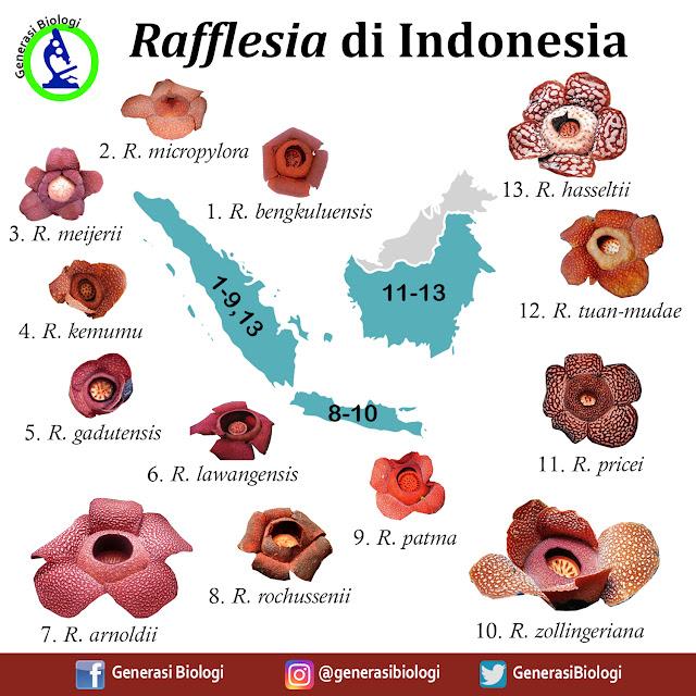 bunga rafflesia arnoldi, perbedaan bunga raflesia dan bunga bangkai, sejarah bunga raflesia arnoldi, asal bunga raflesia, manfaat bunga raflesia, bunga rafflesia merupakan flora endemik dari negara, deskripsi bunga raflesia arnoldi, rafflesia arnoldii