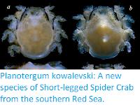 https://sciencythoughts.blogspot.com/2019/10/planotergum-kowalevski-new-species-of.html