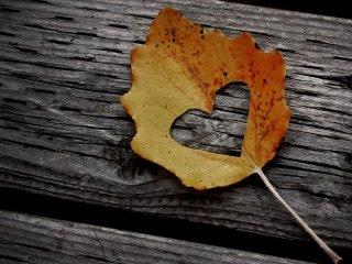 Pozadine Za Mobitele Urezano Srce U Listu Jesen
