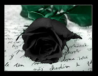 Black rose on paper with script writing