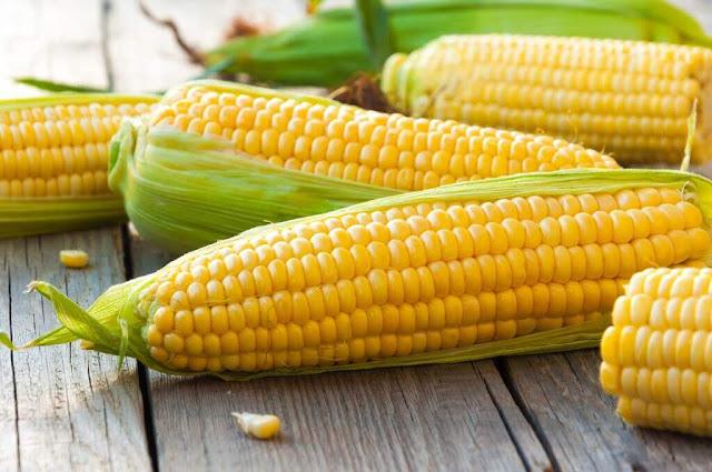 Jagung Makanan Pokok Pengganti Nasi Yang Sehat