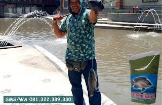 Umpan Ikan Nila Khusus Siang Hari