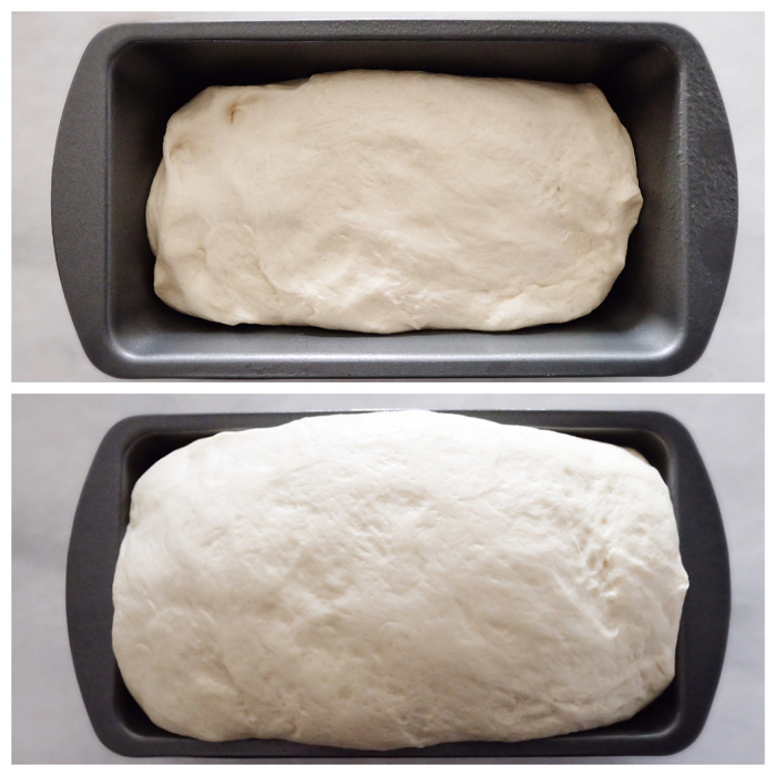 second rise before and after in loaf pan