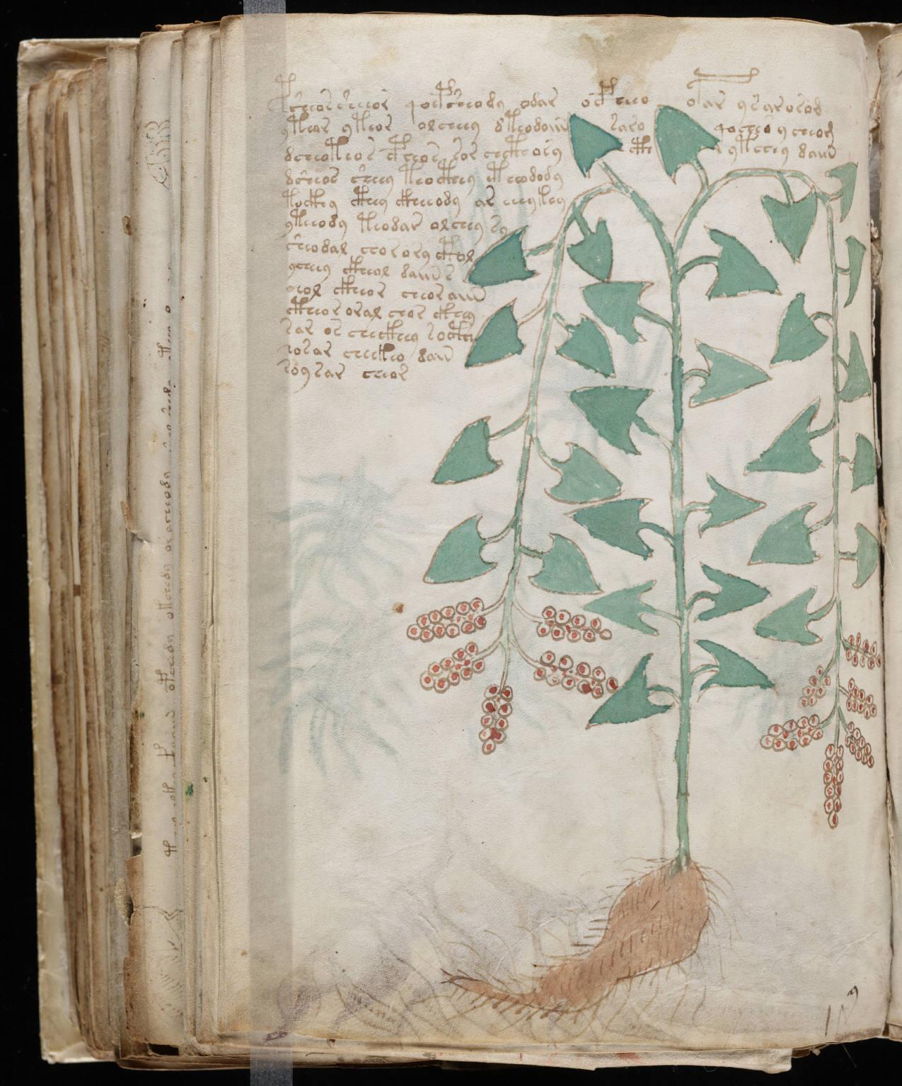 manuscrito172