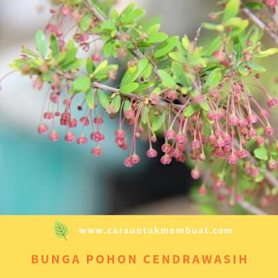 Bunga Pohon Cendrawasih