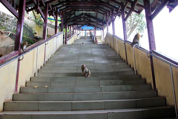 Escalera repleta de monos - Monte Popa - Bagan