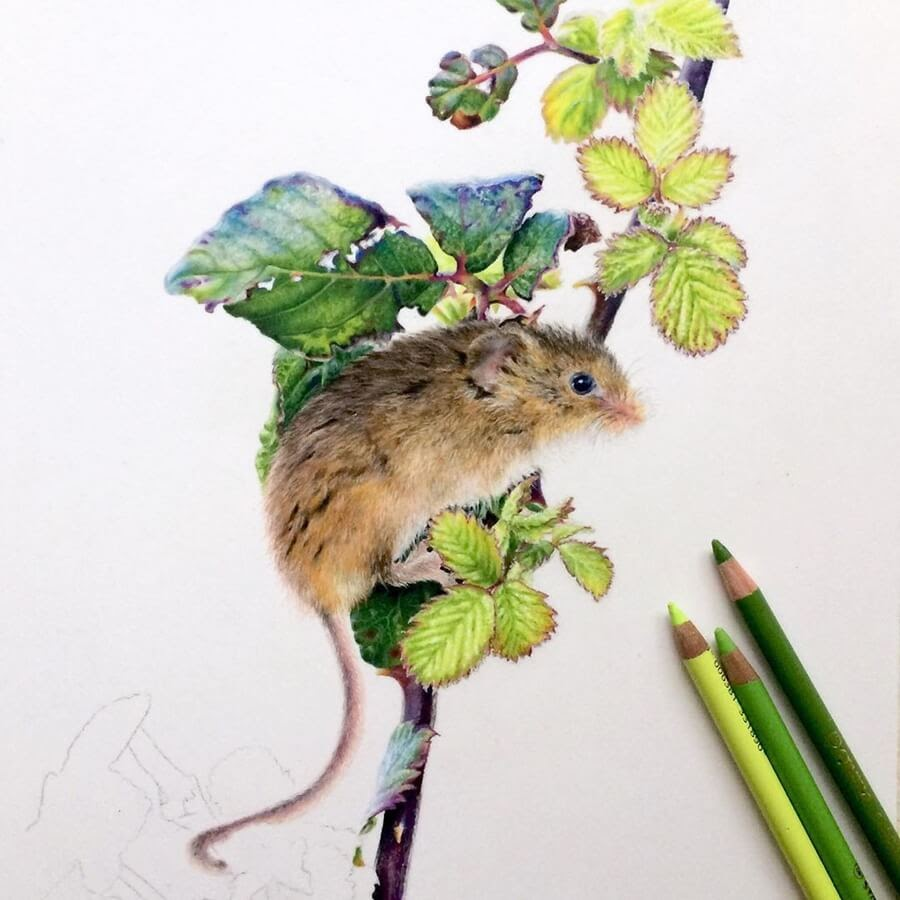 13-Cute-Little-Field-Mouse-Julia-M-www-designstack-co