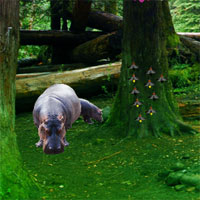 WowEscape Hippo Jungle Es…