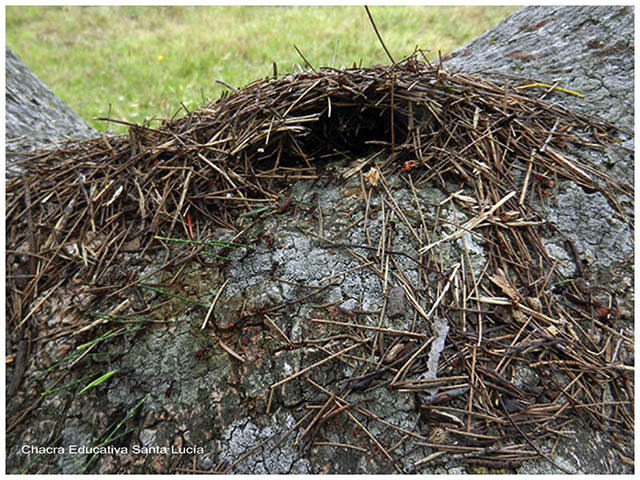 Hormigas en la boca del hormiguero -Chacra Educativa Santa Lucia