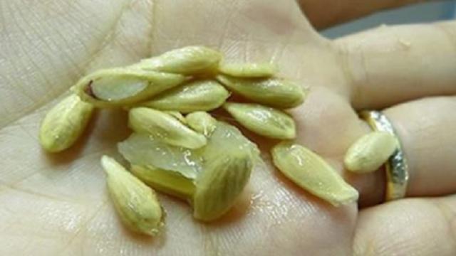 semillas de limón