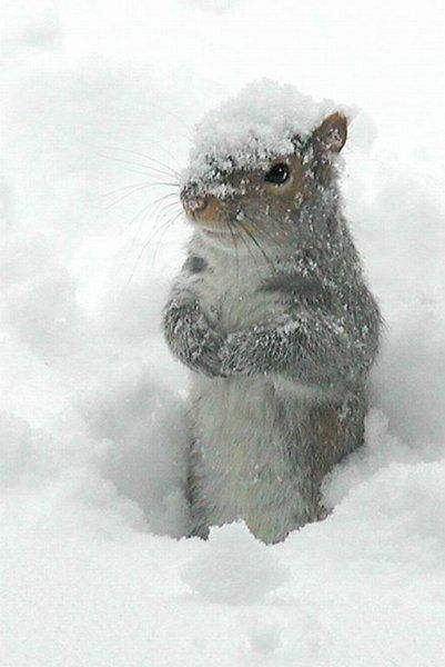 Beautiful winter scene with adorable squirrel in snow