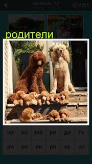 родители две собаки рядом с которыми находятся щенки 22 уровень 667 слов
