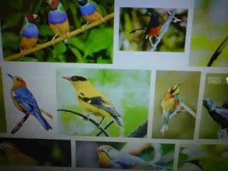 Burung Kicauan Terbaik Untuk Dipelihara Orang Berprofesi Pengacara Indonesia