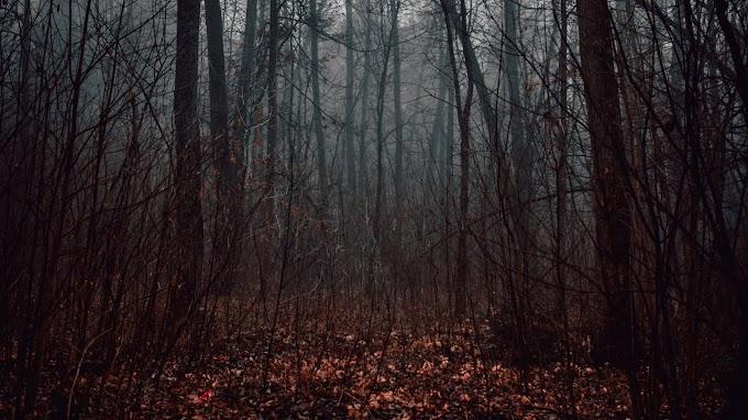 Papel de Parede Floresta, Nevoeiro, Outono. Árvores