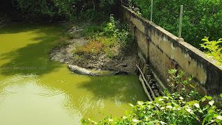 bakkhali crocodile park