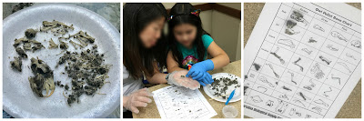 Owl pellet dissection, science programs for kids, STEM, STEAM