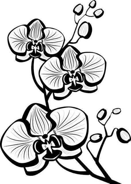 kartun bunga anggrek