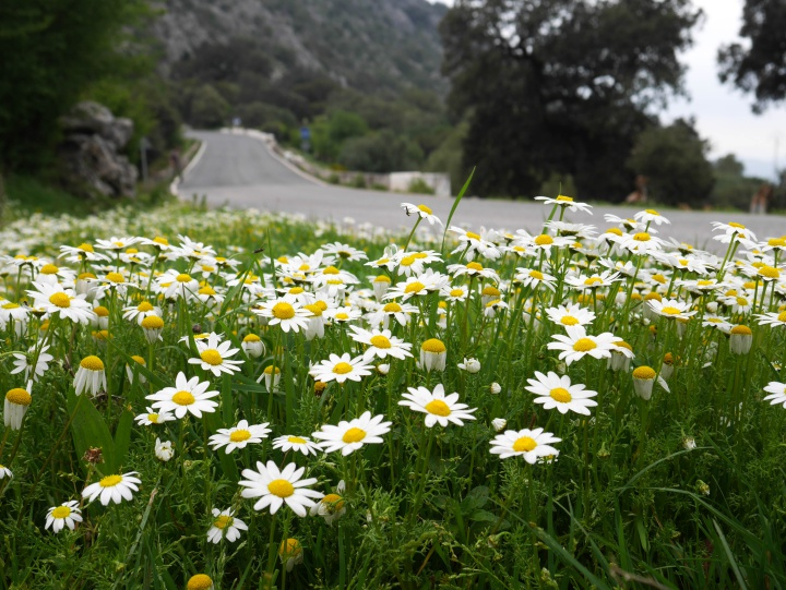 flowers in Sierra de Grazalema, Spain