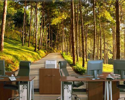 skogstapet strädstammar landskap fototapet sommar stig väg träd