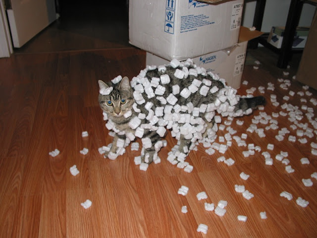 Cat demonstrating static cling with styrofoam peanuts