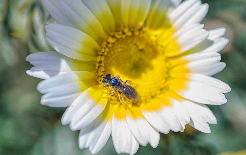 No sólo la abeja puede polinizar