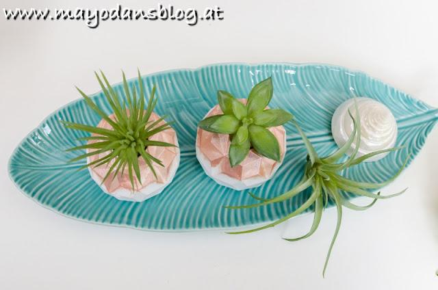 Luftpflanzen-Halter selber machen