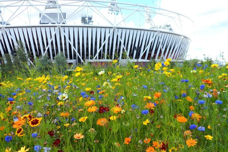 Prado de flores en el Parque Olímpico de Londres