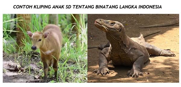 Intip Tugas Kliping Anak SD, Nama-nama binatang langka di Indonesia dan Gambar